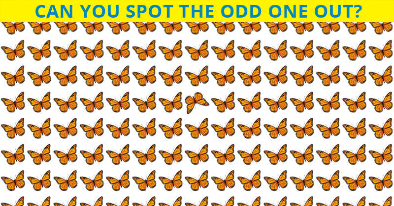You Will Never Score More Than 50% In This Tricky Odd One Out Visual Challenge
