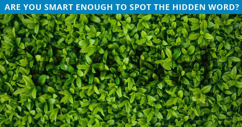 Only 1 In 20 Sharp-Eyed People Can Beat This Tough Hidden Word Visual Game. How About You?