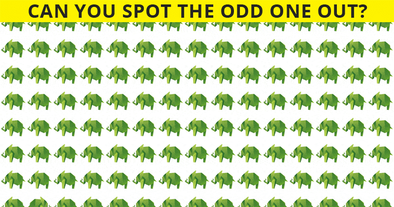 Almost No One Can Ace This Challenging Odd One Out Visual Challenge. How About You?