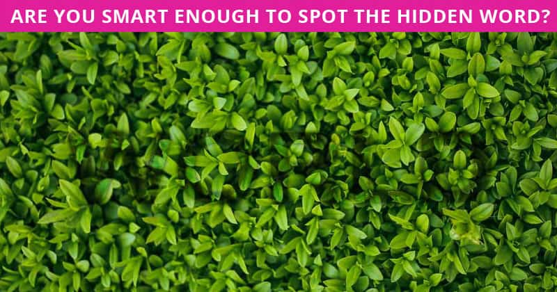 Only People With A High IQ Will Be Able To Ace This Hidden Word Visual Puzzle! How About You?