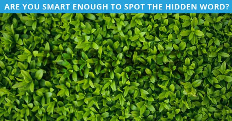 Only 1 In 30 Sharp-Eyed People Can Achieve 100% In This Difficult Hidden Word Visual Puzzle. How About You?