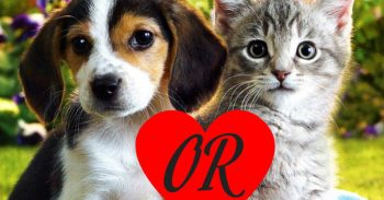 Can We Really Guess If You Are A Dog Or A Cat Person?