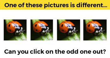 Visual Detail Test – Can You Spot All The Differences?