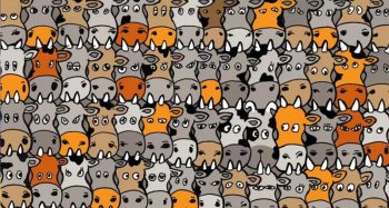 Can You Find The Dog Hidden In The Cows?
