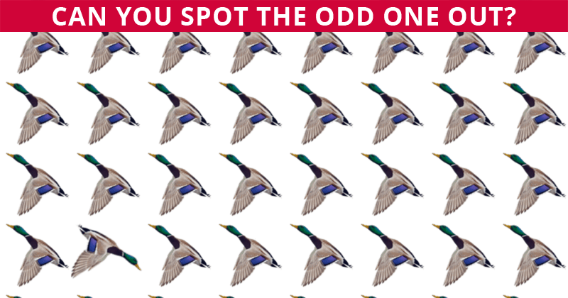 Only 1 In 30 Sharp-Eyed People Can Beat This Challenging Visual Puzzle. How About You?