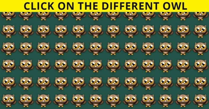 Can You Identify The Odd Owl Out In This Difficult Test?