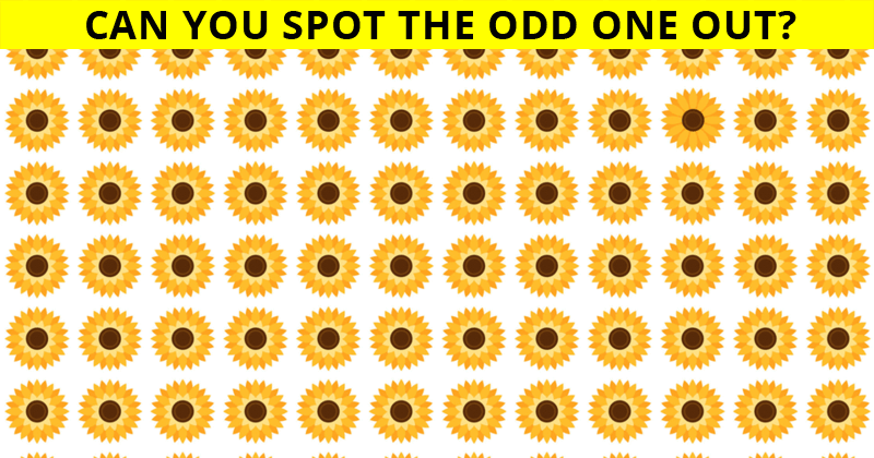 No One Can Score A Perfect Score On This Odd One Out Visual Challenge Without Cheating