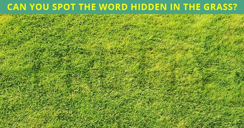 How Quickly Can You Find The Disguised Word In This Difficult Visual Challenge?