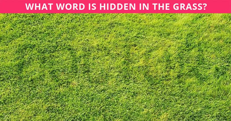 Only 1 in 30 Sharp-Eyed Geniuses Can Spot The Word Hidden In The Grass!