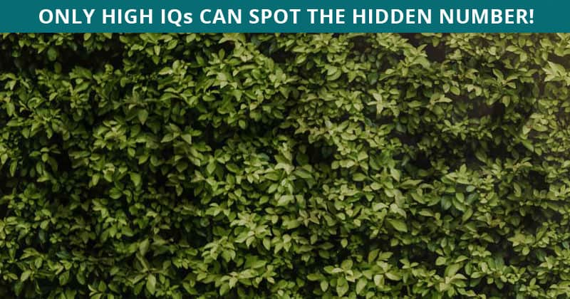 People Are Saying This Viral Hidden Number Quiz Is Impossible. Prove Us Wrong!
