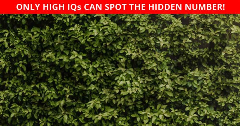 This Hidden Number Puzzle Will Determine Your Visual Perception Talents!
