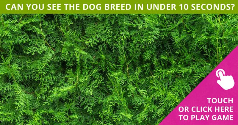 How Quickly Can You Find The Hidden Dog Breeds In This Tough Test?