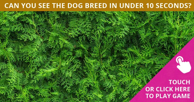 Only 4% Of People Can Achieve 100% In This Hidden Dog Breeds Quiz. How About You?