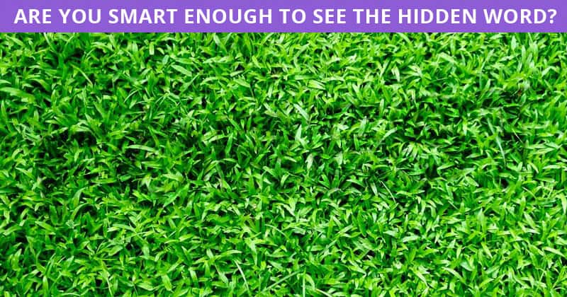 Only 4% Of People Can Achieve 100% In This Hidden Word Puzzle. Are You Up To The Challenge?