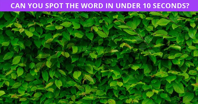Only 4% Of People Can Beat This Hidden Word Quiz! Find Out If Your IQ Is High Enough To Pass This Test