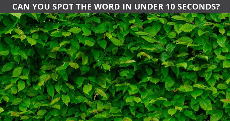 Only 1 In 30 Sharp-Eyed People Can Ace This Hidden Word Visual Test. Are You Up To The Challenge?