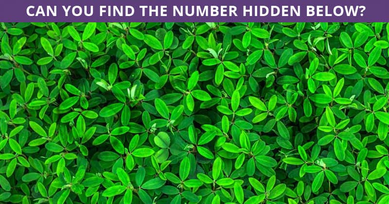 Only People With An Unusually High IQ Will Be Able To Ace This Hidden Number Visual Puzzle! How About You?