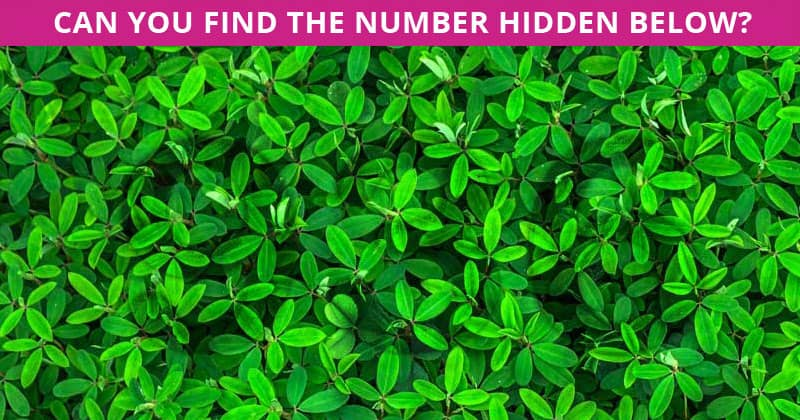 This Hidden Number Test Will Determine Your Visual Perception Abilities In One Minute